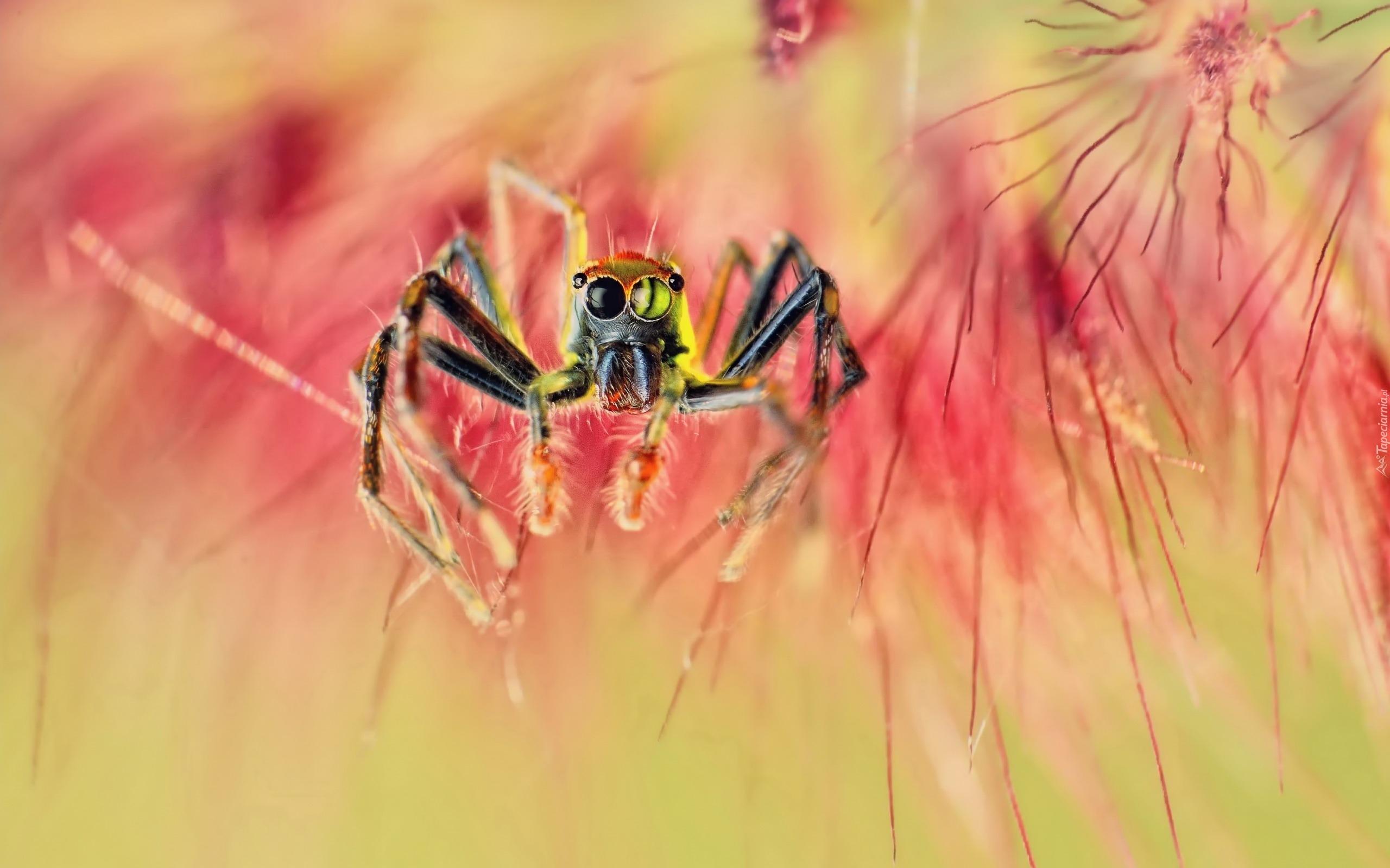природа животные паук  № 2544178 без смс