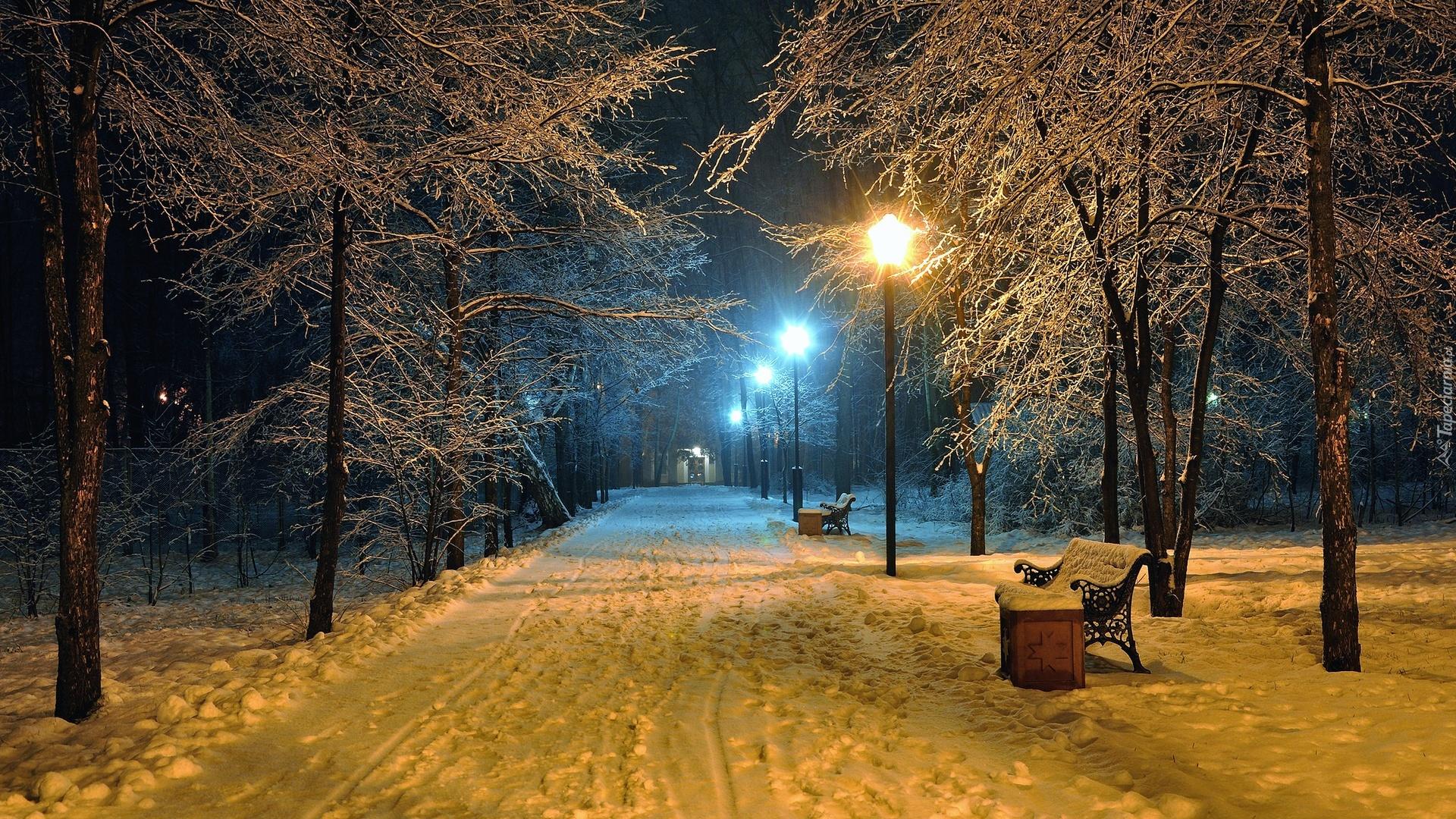 Park Zimą Wieczorową Porą