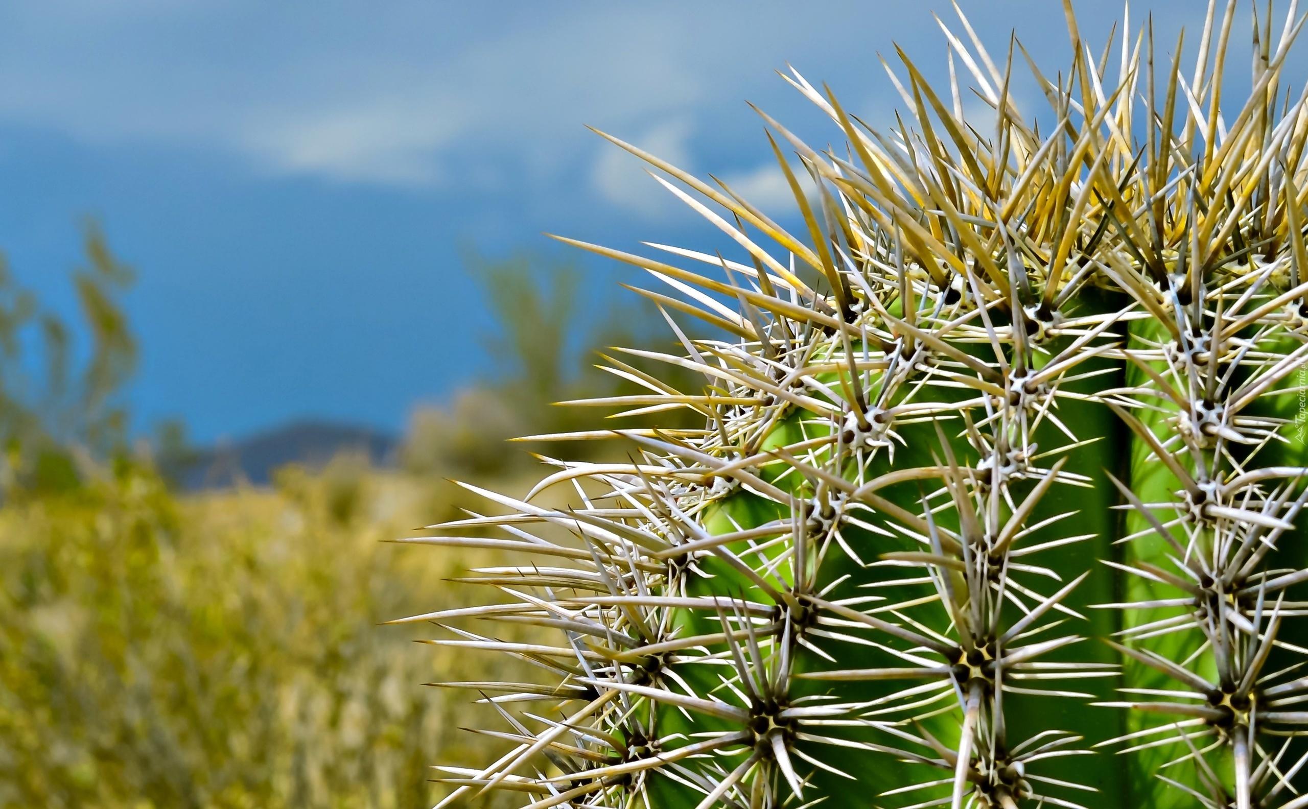 Суккуленты 50 фото чудные растения привыкшие к засухе