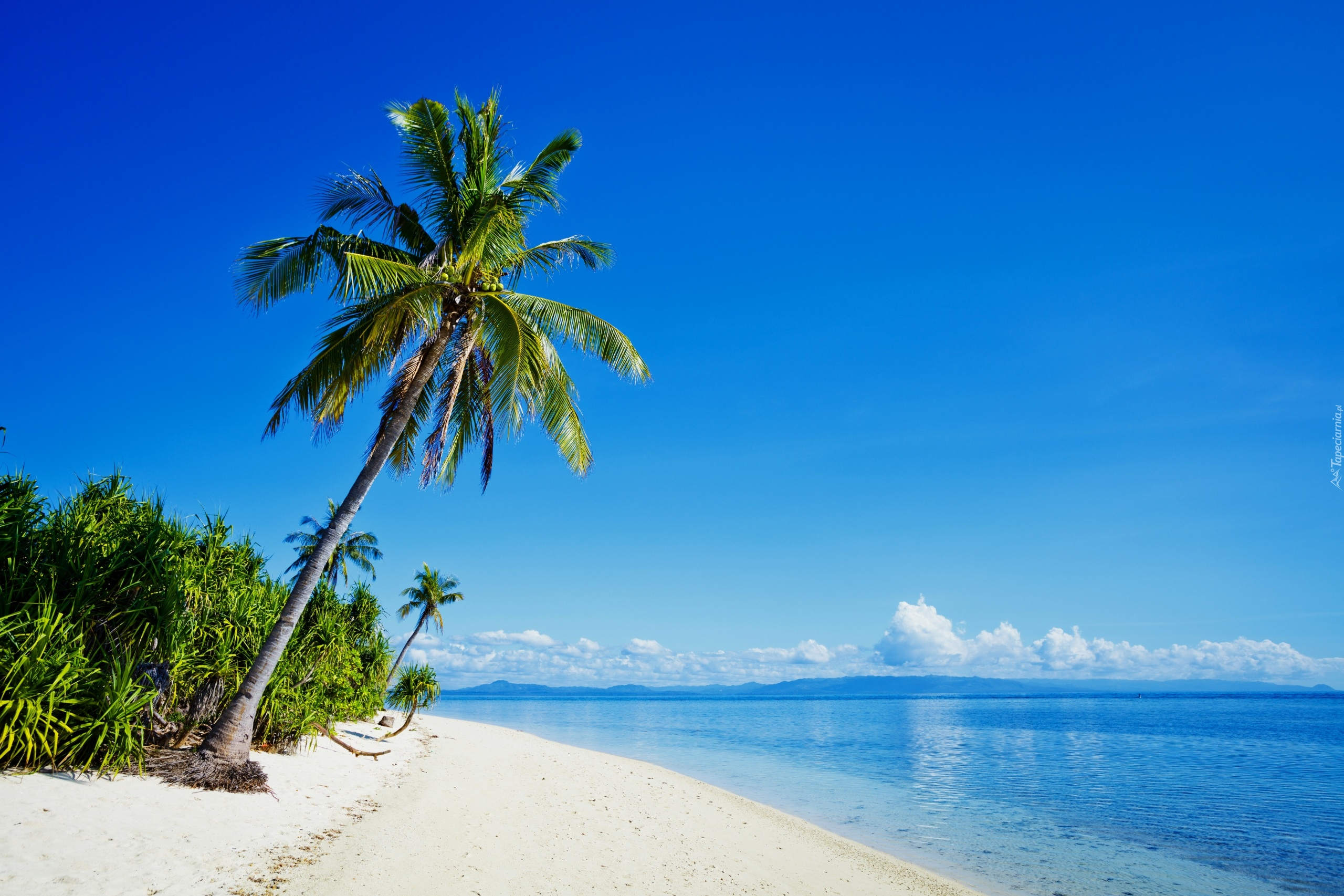 Wybrze e filipin z pla i palmami for Palme de piscine
