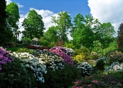 Park, Kwiaty, Rododendron
