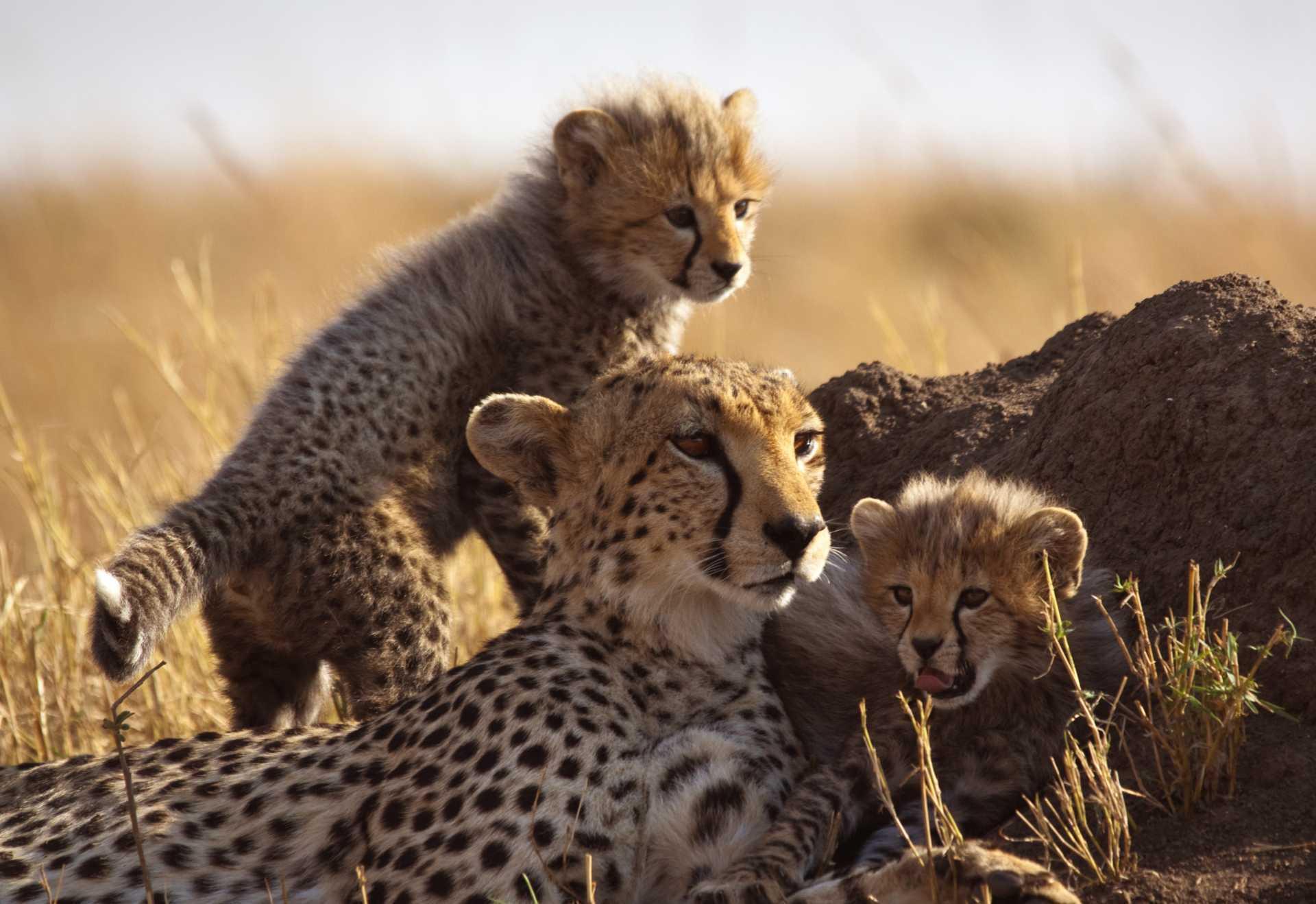 Zdjęcie Mama z dziećmi