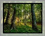 Las, Promienie słońca, Drzewa, Wiosna