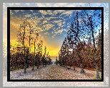 Park, Jesień, Ławki, Przycięte, Drzewa, Wschód słońca