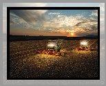 Pole, Zboże, Kombajny Claas Lexion 750, Niebo, Zachód słońca