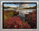 Jezioro Jack London, Góry, Krzewy, Roślinność, Kołyma, Obwód magadański, Rosja