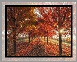 Jesień, Droga, Drzewa, Słońce
