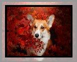 Pies, Welsh corgi pembroke, Krzew, Czerwone, Liście