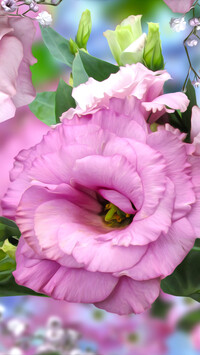 Eustoma w grafice