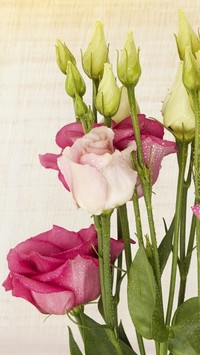 Eustoma w kroplach wody
