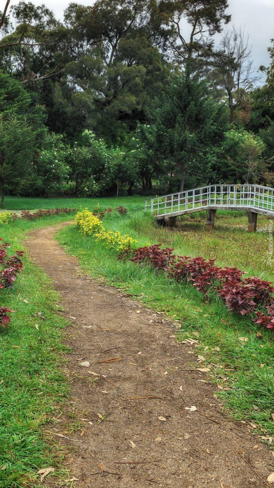Alejka i mostek w parku