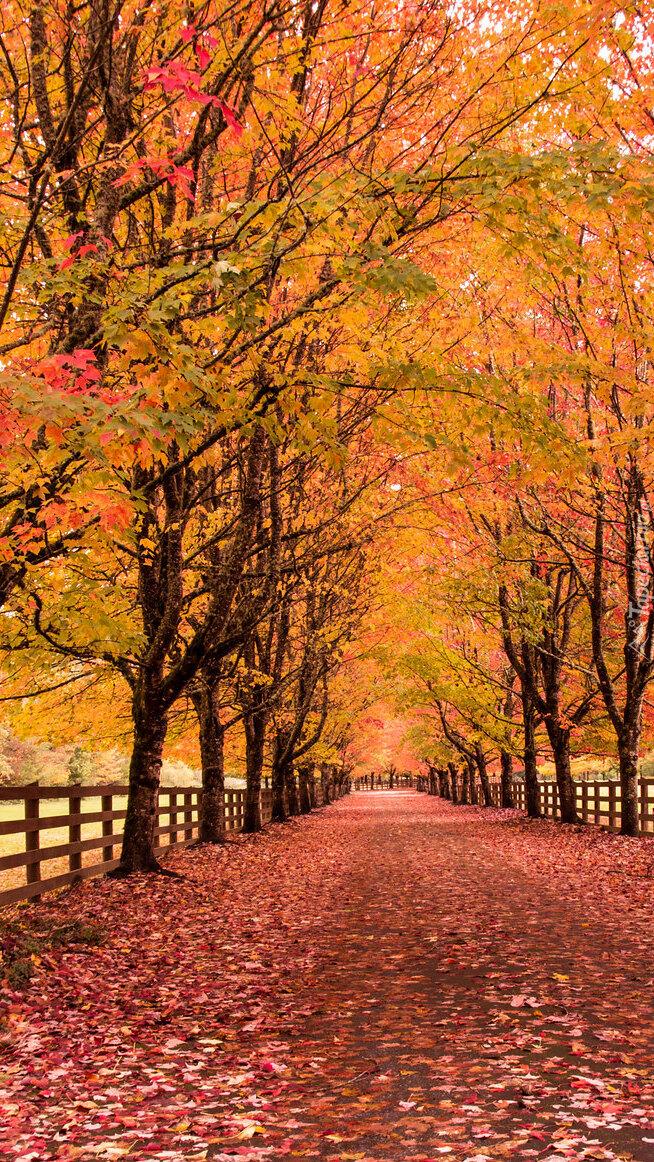 Alejka pośród jesiennych drzew