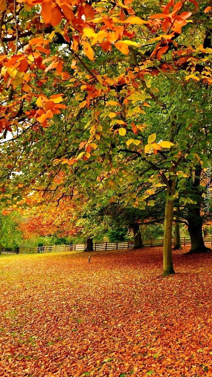 Alejki w jesiennym parku