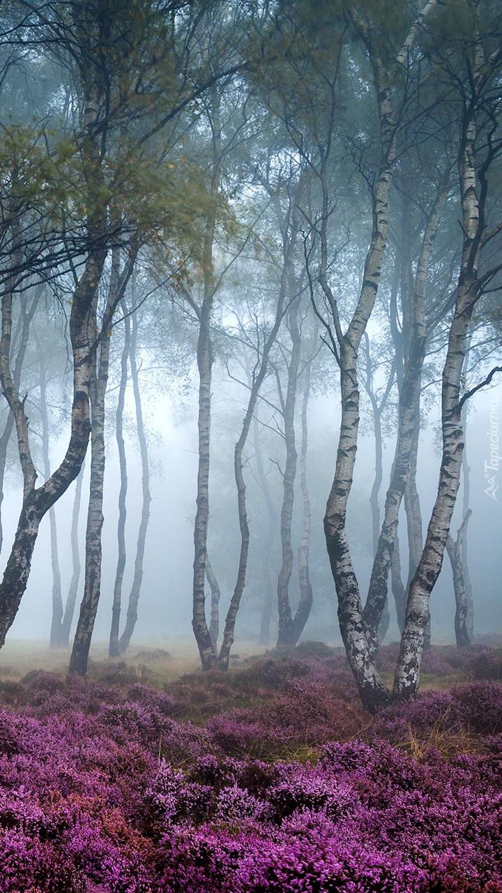 Angielska mgła w lesie
