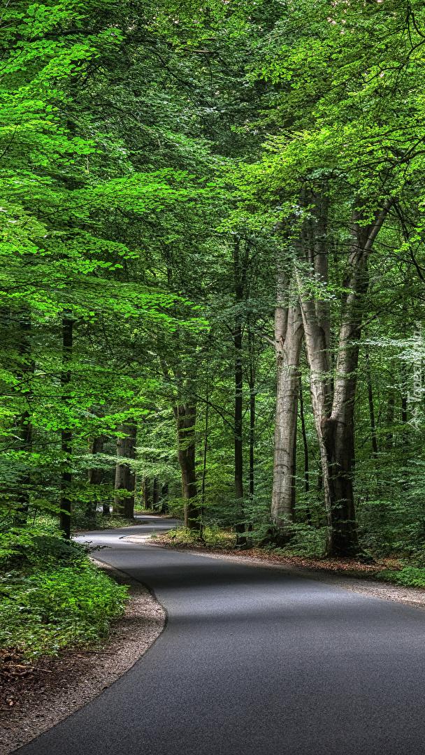 Asfaltowa droga w zielonym lesie