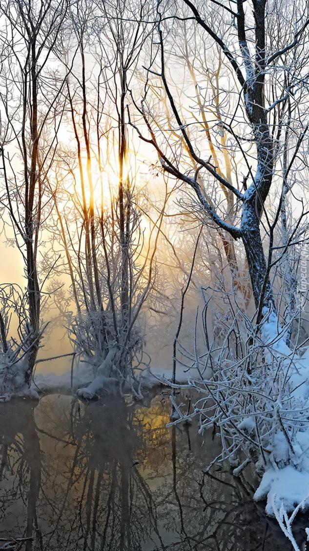 Bagno i drzewa w zimowej scenerii