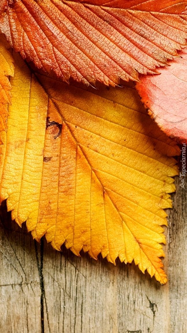 Barwne jesienne liście