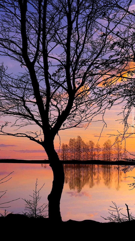 Bezlistne drzewa nad jeziorem