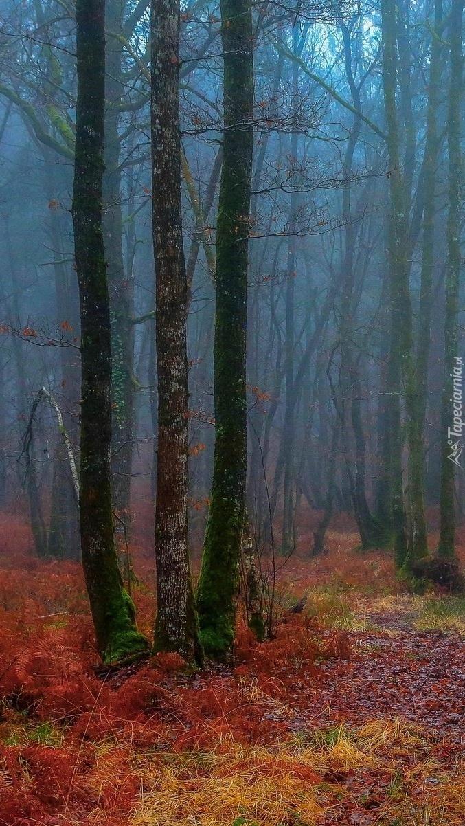 Bezlistne drzewa we mgle