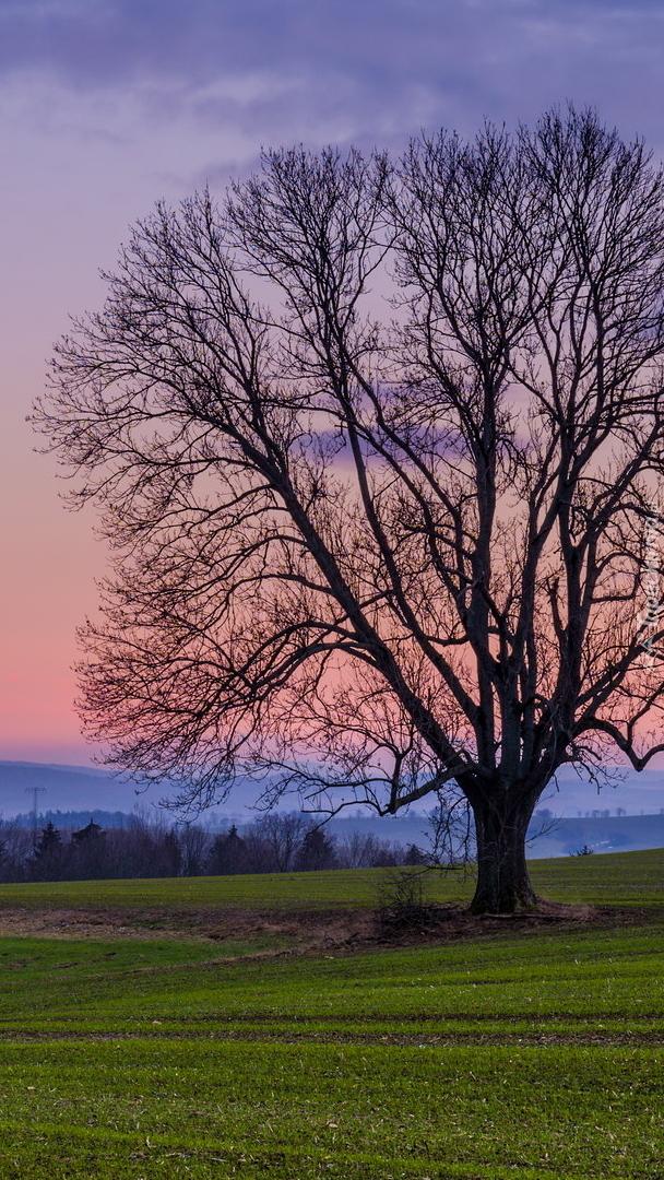 Bezlistne drzewo na łące