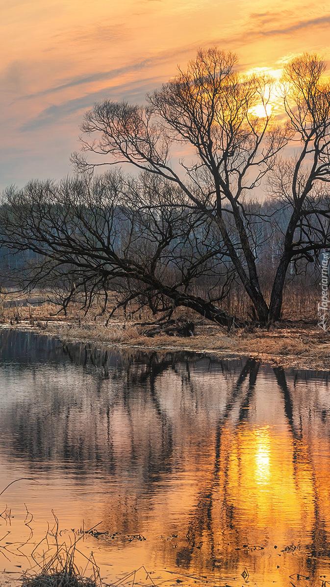 Bezlistne drzewo nad rzeką