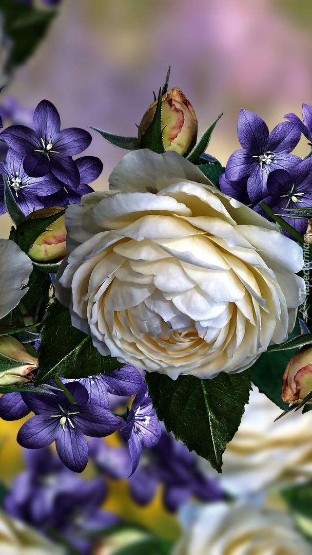 Biała róża i małe fioletowe kwiaty w grafice