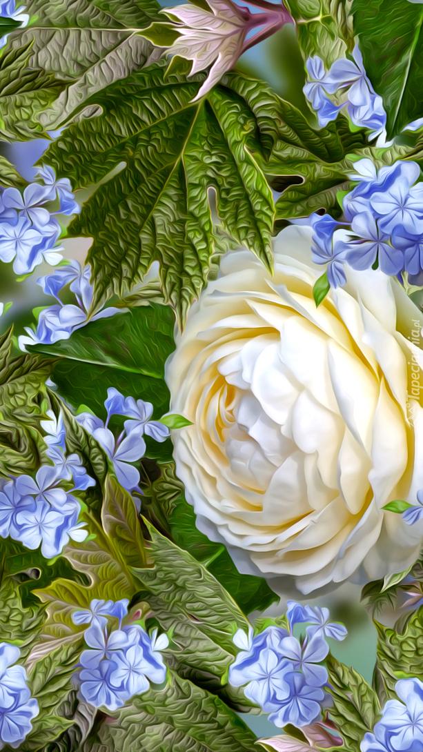 Biała róża i niebieskie kwiatki
