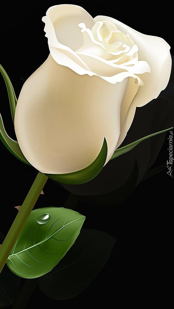 Biała róża z kroplą na listku
