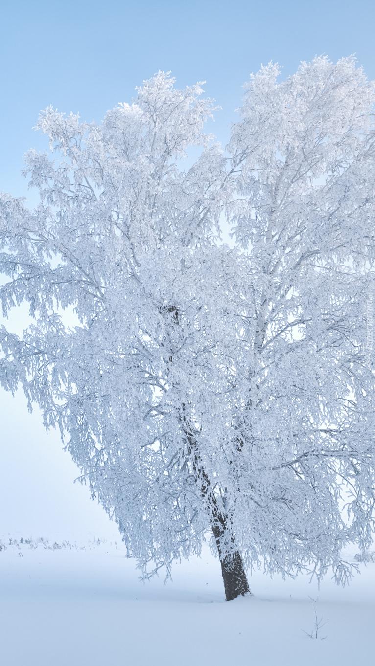 Białe drzewo