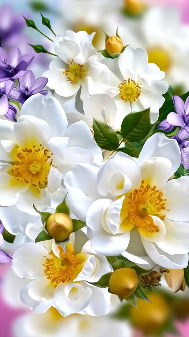Białe dzikie róże w grafice