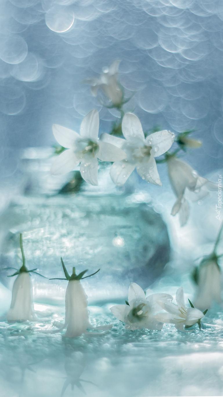 Białe dzwonki na rozmytym tle