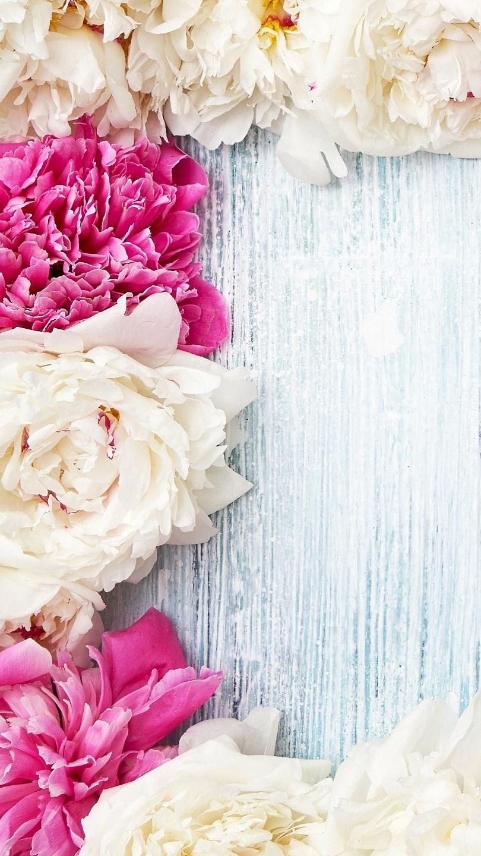 Białe i różowe piwonie
