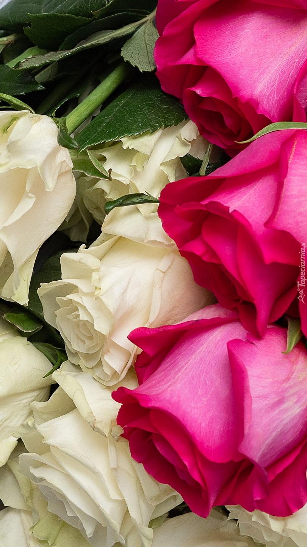 Białe i różowe róże