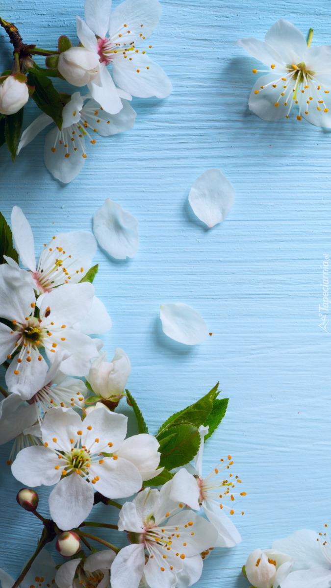 Białe kwiatki na deskach