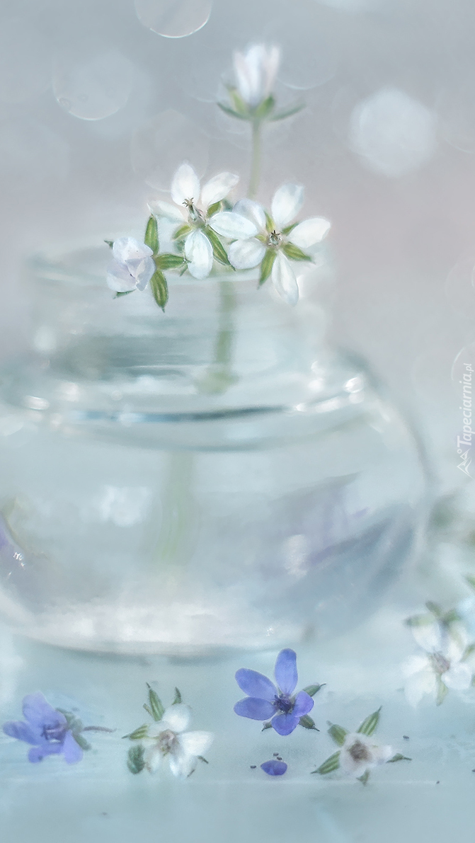 Białe kwiatki w wazoniku