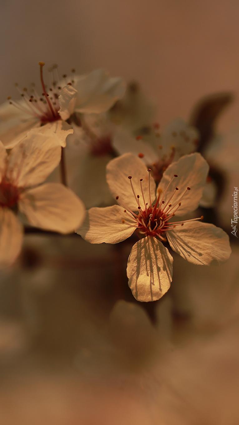 Białe kwiatki z pręcikami