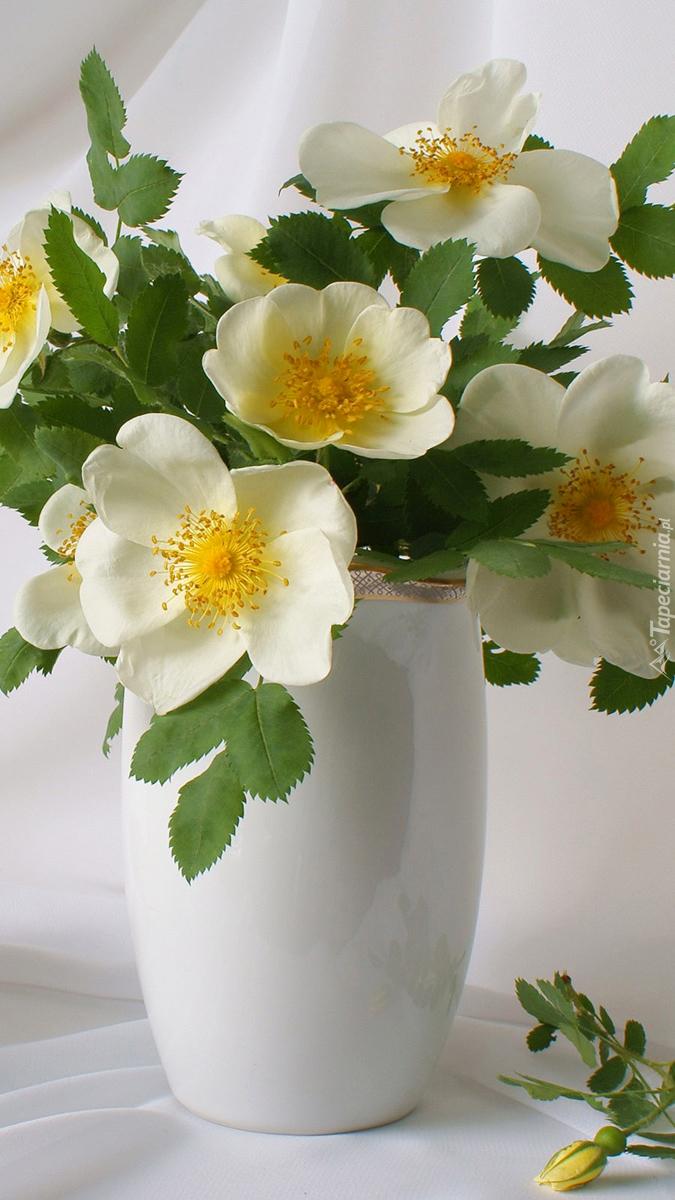 Białe kwiaty dzikiej róży w wazonie
