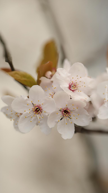 Białe kwiaty na gałązce