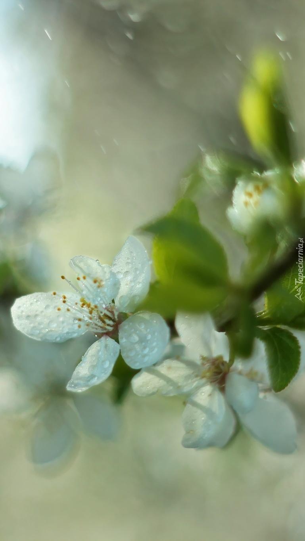 Białe kwiaty owocowe