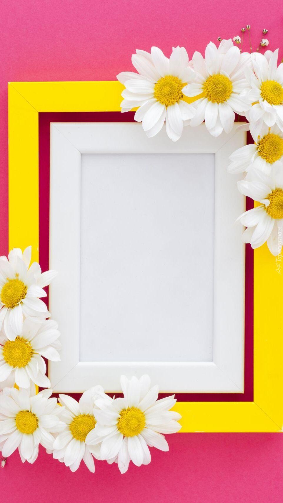 Białe margeryki na żółto-białej ramce