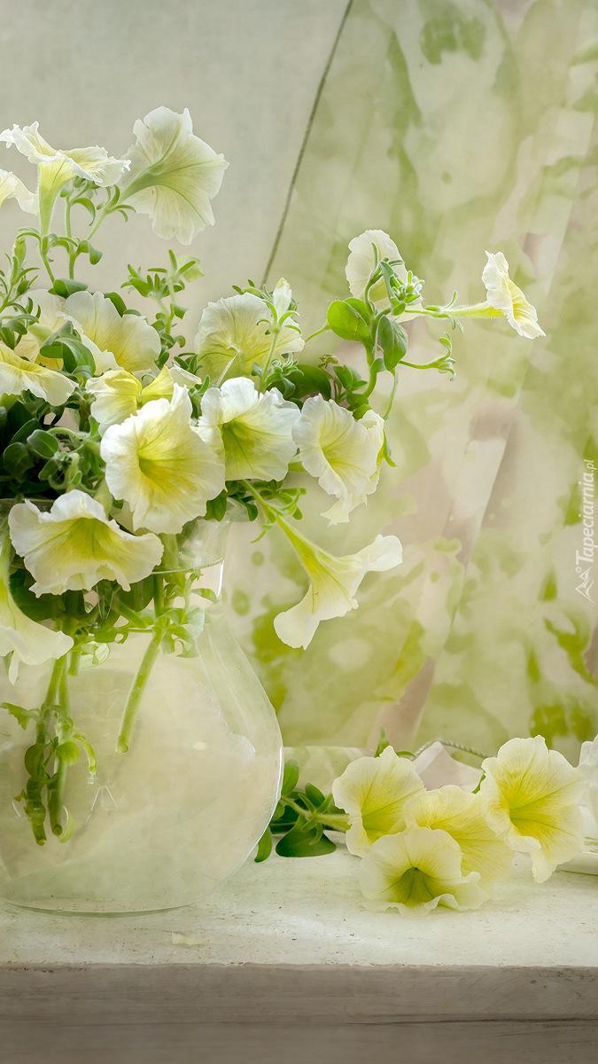 Białe petunie w wazonie