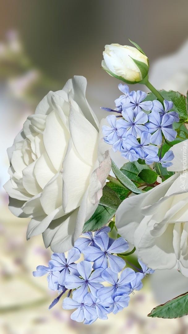 Białe róże i niebieskie kwiatki