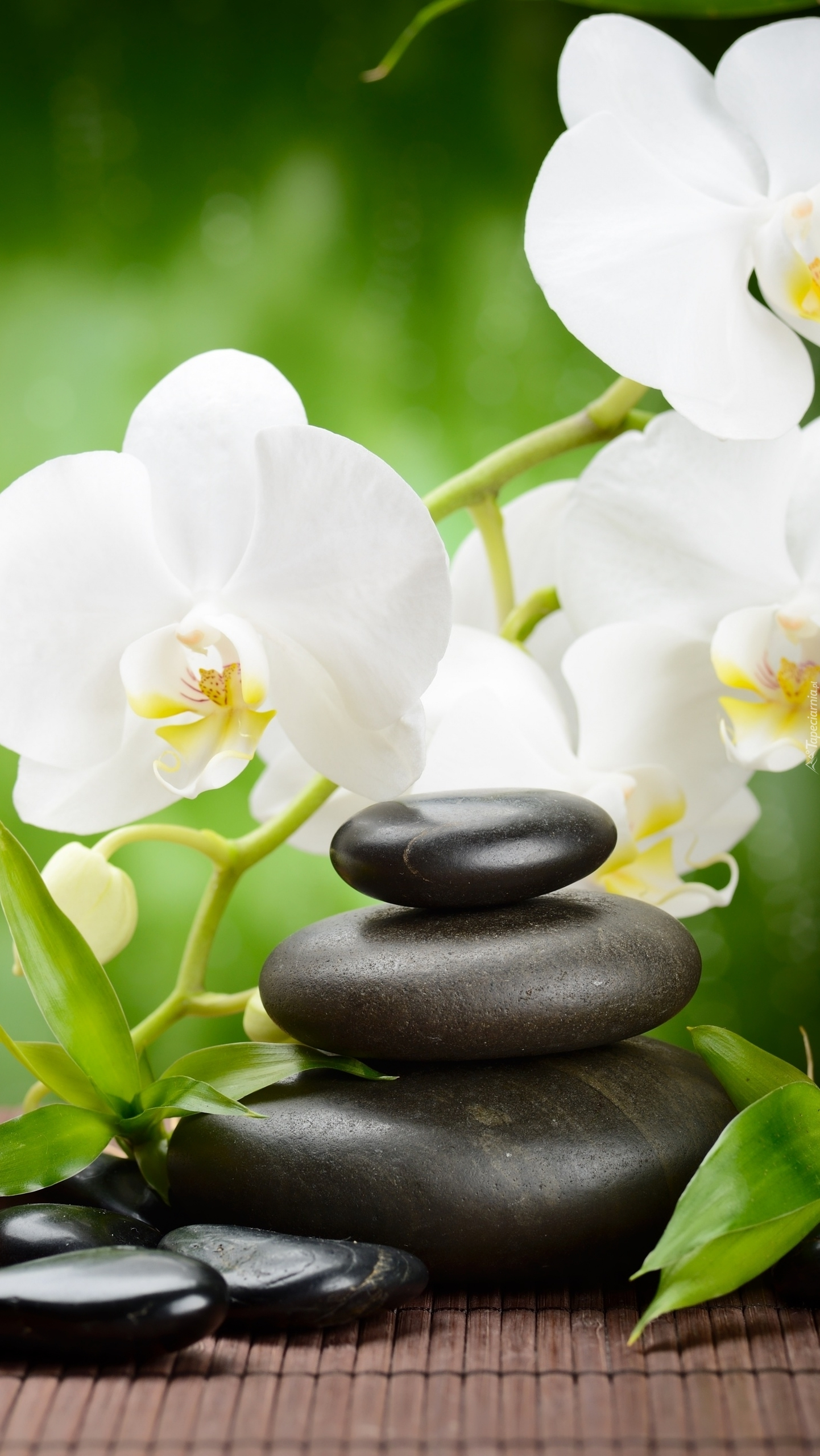 Białe storczyki obok kamieni