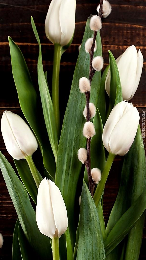 Białe tulipany z gałązką bazi