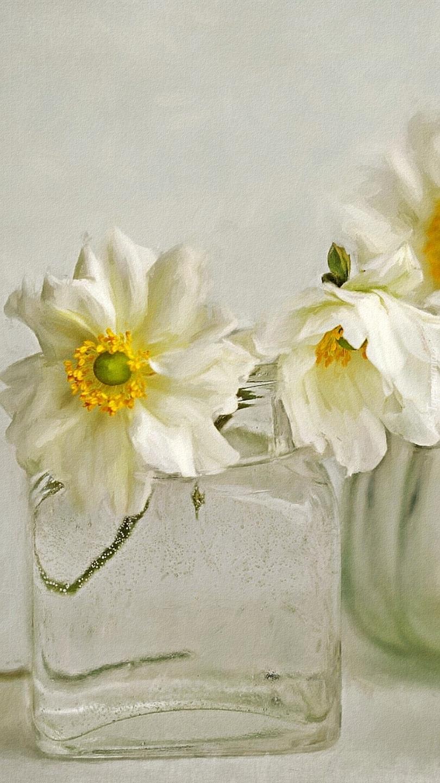 Białe zawilce w wazonie