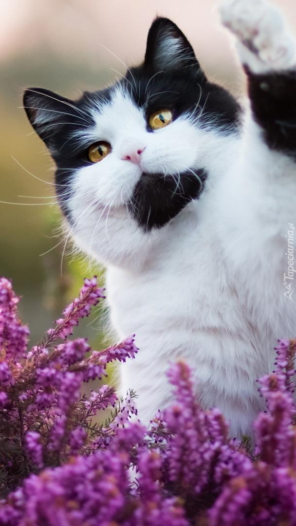 Biało-czarny kot