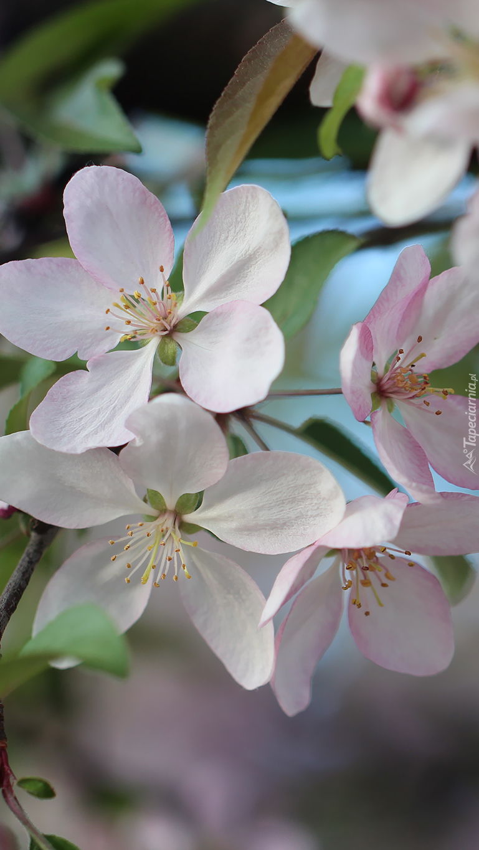 Biało-różowe kwiatki na gałązce