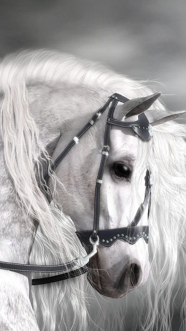 Biały koń z długą grzywą