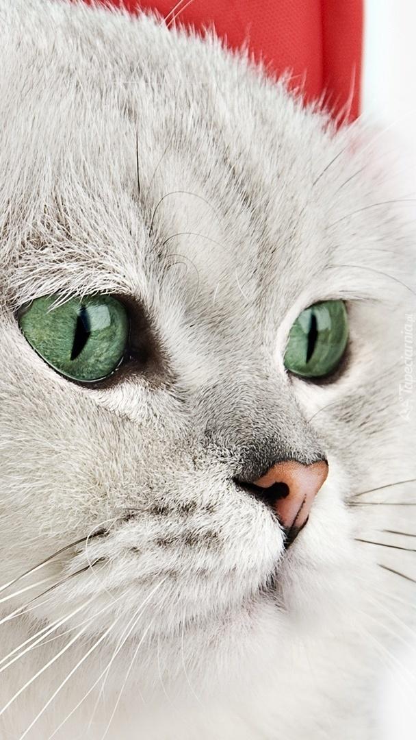 Biały kot z zielonymi oczami