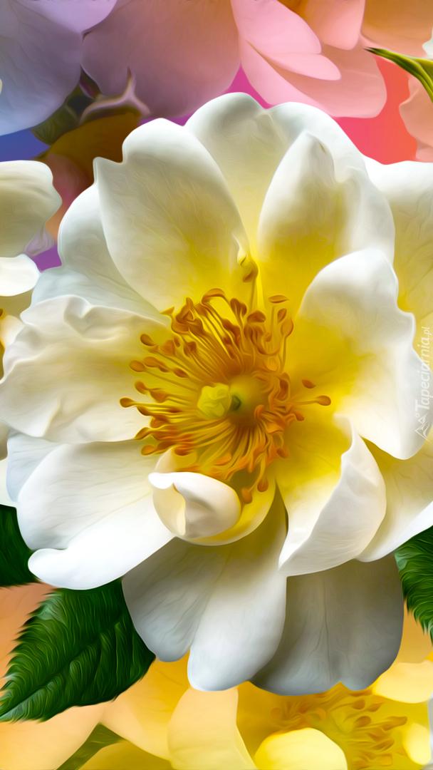 Biały kwiat dzikiej róży